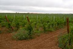 Celler-Vinya-els-Vilars-verema-2012-6