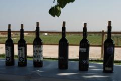 Celler Vinya els Vilars-visita PSC -1