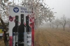 Vinya els Vilars Vermouth entre flors Arbeca - 13 de 25