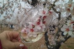 Vinya els Vilars Vermouth entre flors Arbeca - 18 de 25