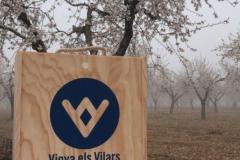 Vinya els Vilars Vermouth entre flors Arbeca - 2 de 25