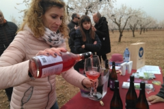 Vinya els Vilars Vermouth entre flors Arbeca - 20 de 25
