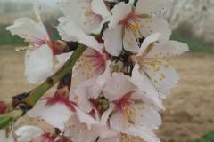 Vinya els Vilars Vermouth entre flors Arbeca - 21 de 25