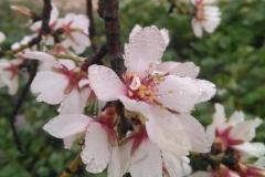 Vinya els Vilars Vermouth entre flors Arbeca - 23 de 25