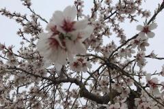 Vinya els Vilars Vermouth entre flors Arbeca - 7 de 25