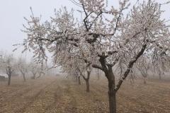 Vinya els Vilars Vermouth entre flors Arbeca - 8 de 25